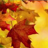 лунный календарь и фазы луны на ноябрь