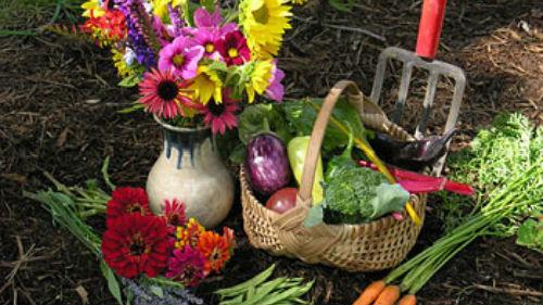лунный календарь-садовода огородника