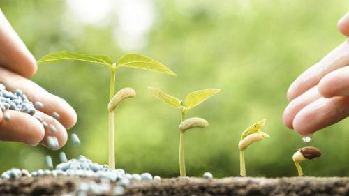 удобрение и полив рассады