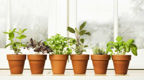 уход за комнатыми растениями в декабре