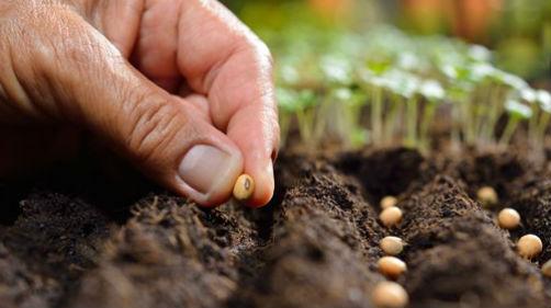 посадка семян на рассаду в теплице