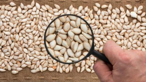 проверка семян на рассаду