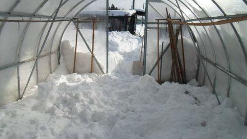 снег в теплицы в феврале