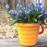 календарь садовода огородника март