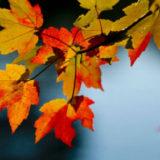 календарь стрижек на октябрь