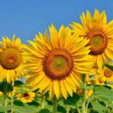 календарь садовода-огородника на год