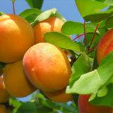 календарь садовода огородника июль