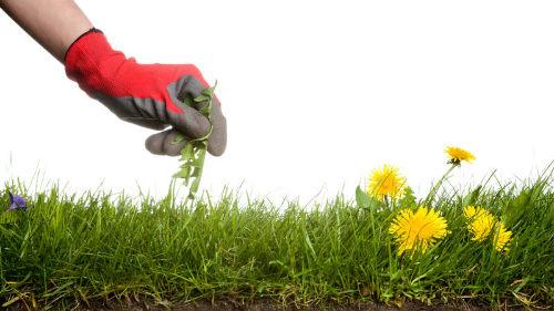 борьба с сорняками в июле