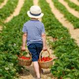 календарь садовода огородника июнь