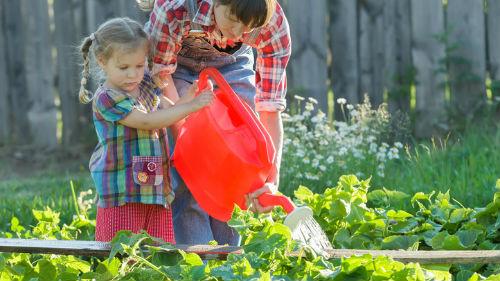 как поливать растения в июне