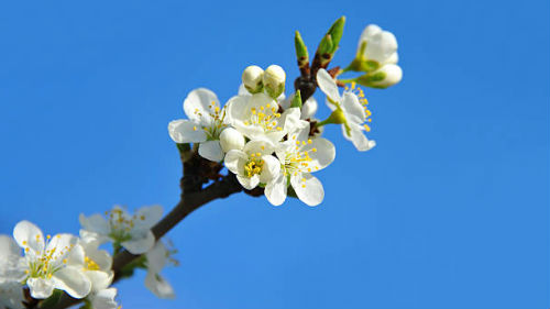 календарь садовода огородника май