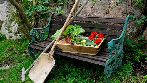 что и когда делать в саду-огороде в сентябре