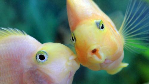 рыбы любовь на апрель
