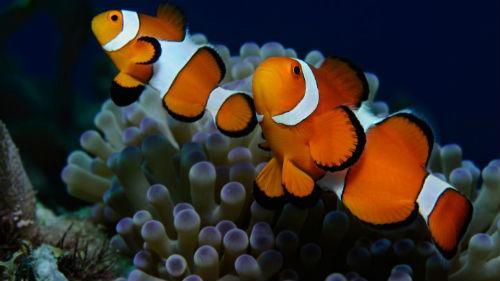отношения со знаком рыбы