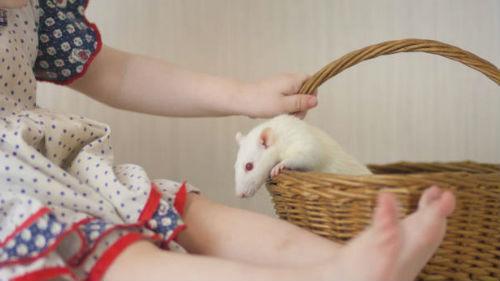 какое имя дать ребенку в год белой крысы летом
