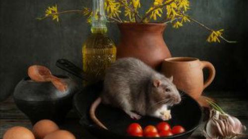 как назвать ребенка в год металлической крысы весной
