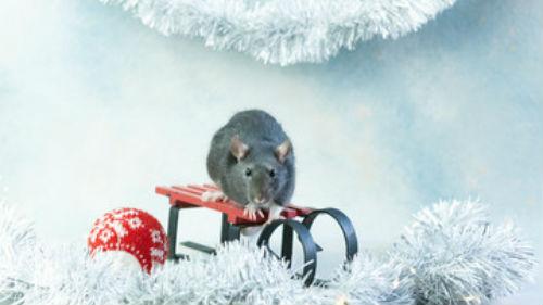 как правильно назвать ребенка в год металлической мыши