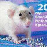 астропрогноз на 2020 год белой металлической крысы
