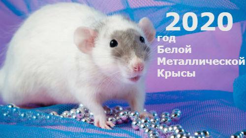 Картинки по запросу год белой крысы 2020