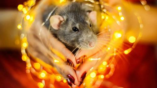 как встречать новый год крысы 2020