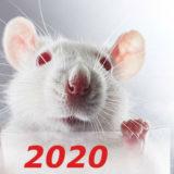 восточный гороскоп на 2020 год Белой металлической крысы