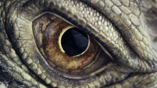 год крысы 2020 для земляного дракона