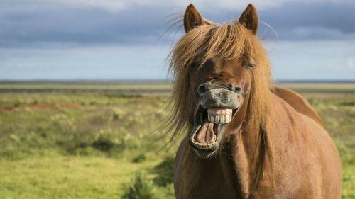 год крысы 2020 для земляной лошади