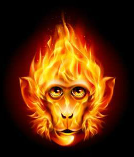 год крысы для огненной обезьяны