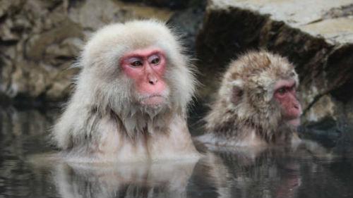год крысы для водяной обезьяны